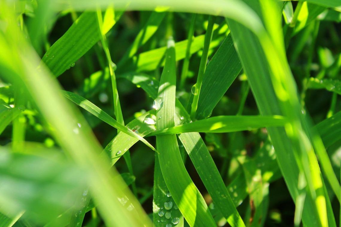 grass-1644835_1920_tante-tati_pixabay